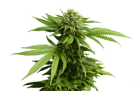 75634435c9bb With Governor's Signature, Illinois Is 11th State to Legalize ...